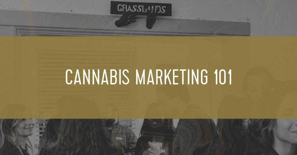 Grasslands cannabis marketing office having a party